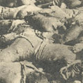 Postcard: Dead bodies at the site of the Honjo Clothing Depot
